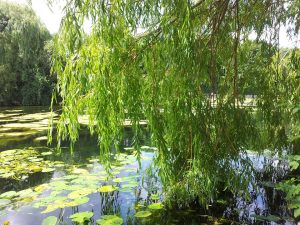 willow-265038_960_720